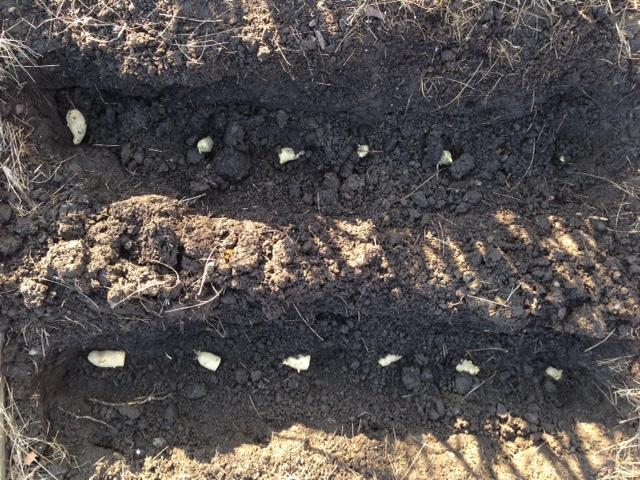 potatoes_05_09_2016